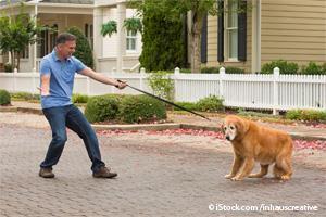 Obediencia Canina