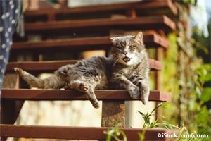 Gato con Artritis