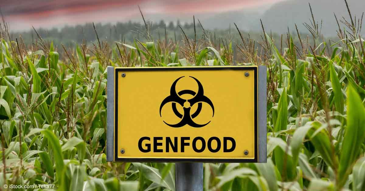 Dangerous Bt-Toxin Found in Monsanto's GM Corn