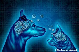 Mascotas Inteligentes