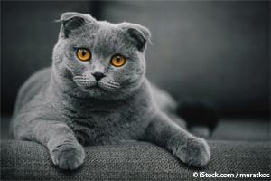Personalidad de los Gatos