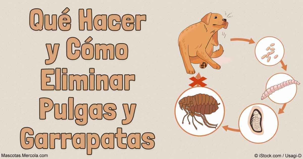 Quitar pulgas de casa awesome with quitar pulgas de casa - Como quitar pulgas en casa ...