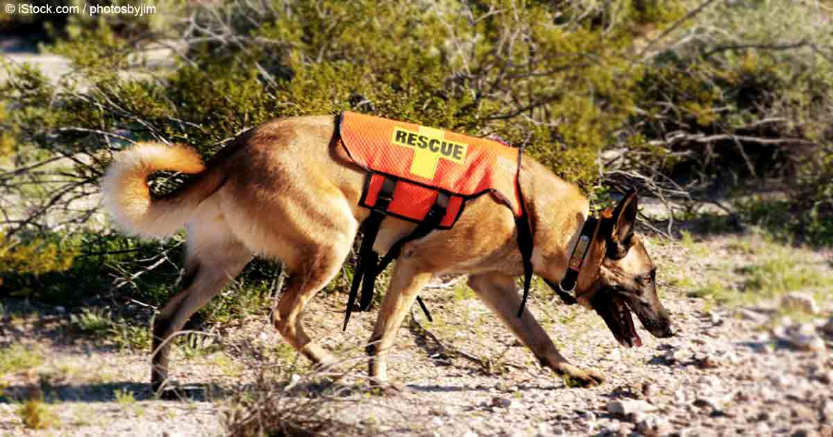 Search And Rescue Dogs Video