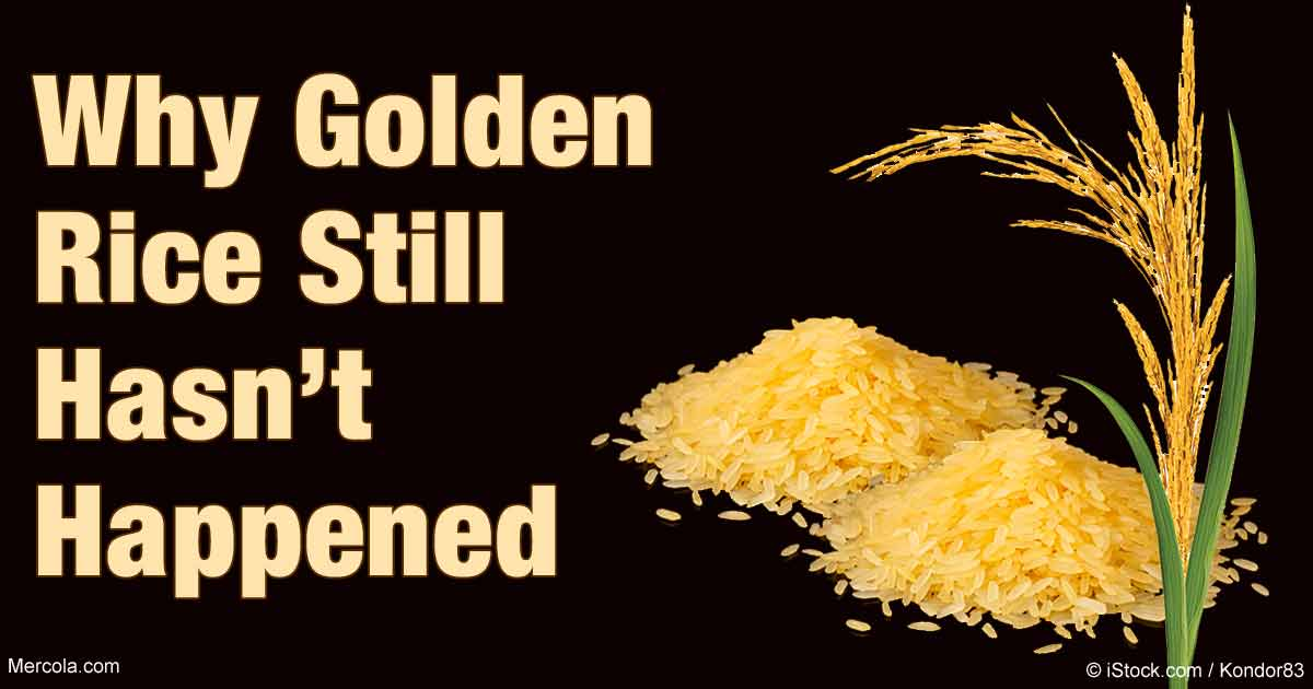 golden rice project Rice: simple prioritization for product managers  simple prioritization for product managers  it's easy to discount the additional effort that one project.