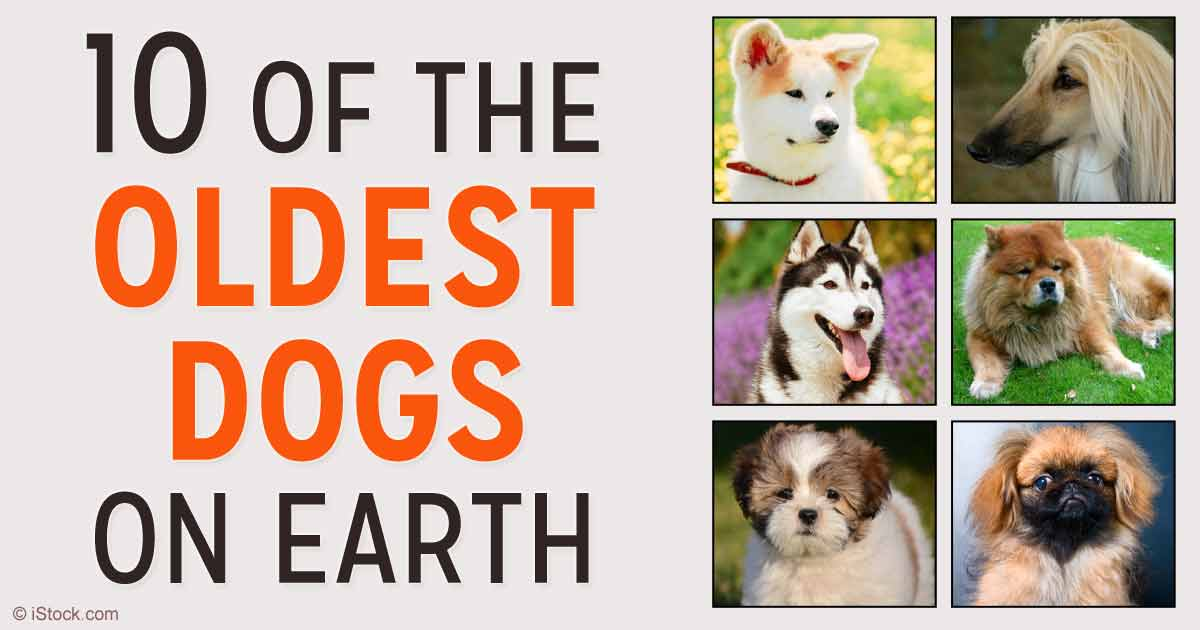 10 of the Oldest Dog Breeds on Earth