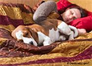 Pets in the Bedroom: Helpful or Harmful for Sleep?