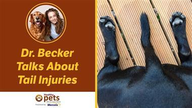 This Pet Injury Can Be Very Scary and Painful for Your Pet