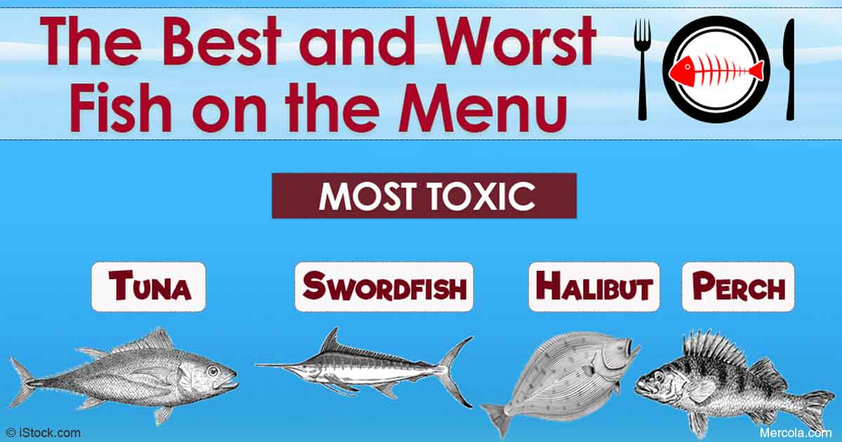 Finding the best seafood for your health and the earth for What fish is healthy to eat