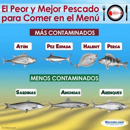 Los Mejores Pescados