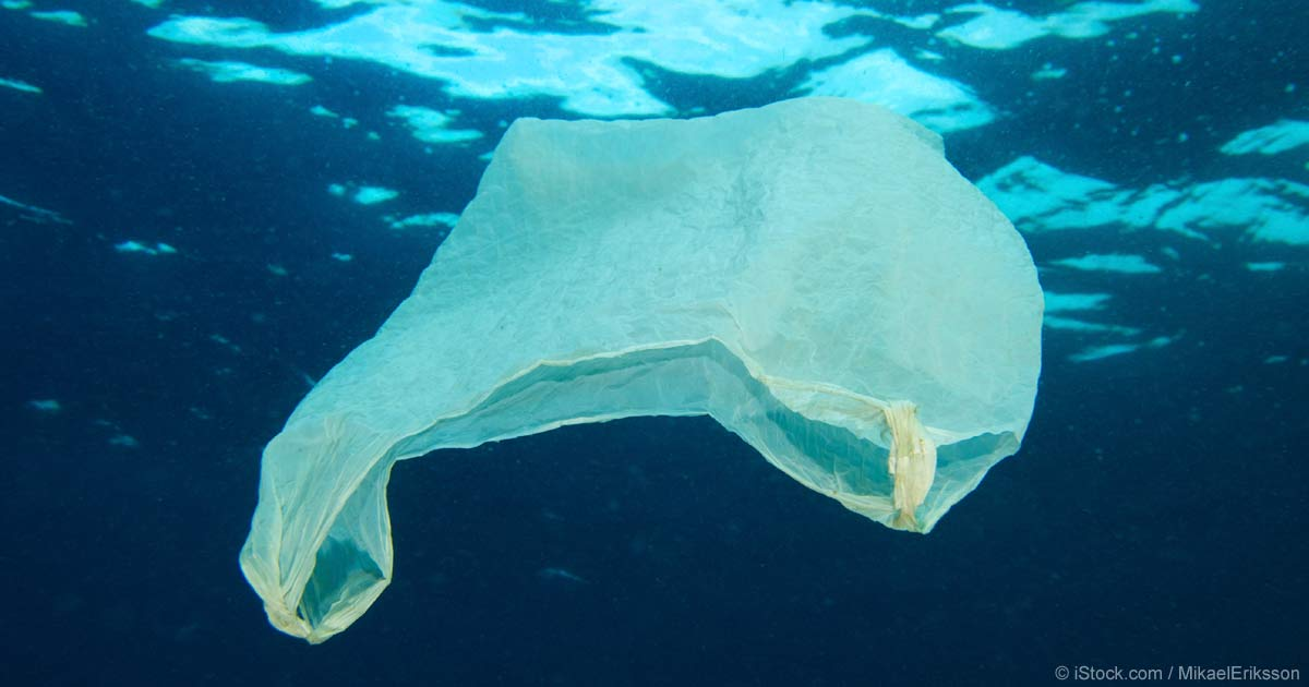 Plastic harms the environment essay