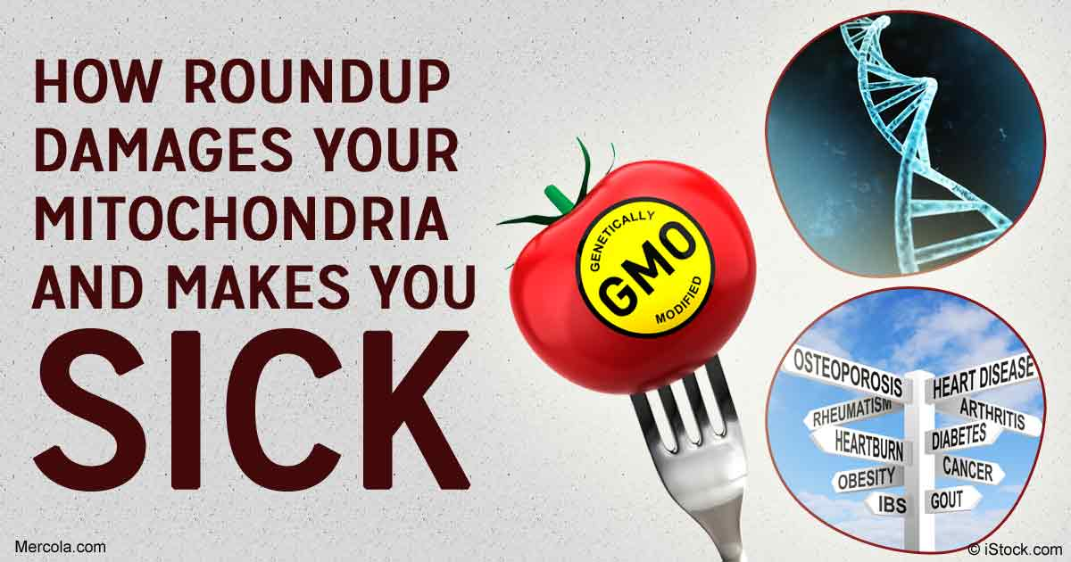 Roundup's Side Effects: Damaged Mitochondria and Sickness