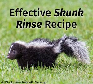effective skunk rinse