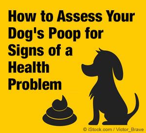 assessing dog poop