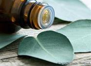Eucalyptus Oil: Essential Oil Extraordinaire