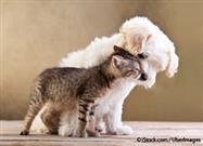 Amantes de Perros y Gatos