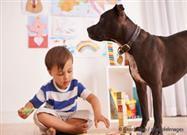 Los Perros Son los Mejores, Pero Estas Mascotas También Ayudan a Reducir la Ansiedad