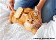 brushing cat coat
