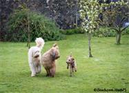 Introducción Perro a Perro