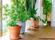Abra Las Ventanas Y Consiga Más Plantas