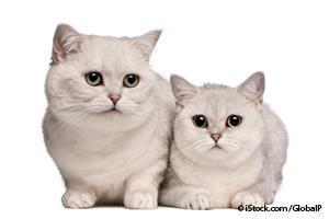 Alimentación Para Gatos Mayores