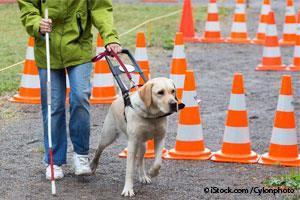 Perros de Guía