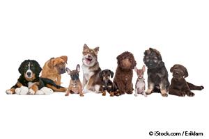 Las 10 Razas de Perros Más Saludables Que Tanto Has Deseado