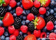 eating berries
