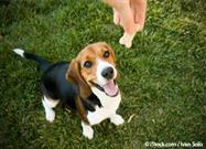 There's a New Study Out on Dog Reward Behaviors, and Guess What It Found?