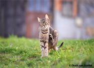 Gatos con Comezón