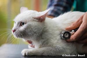 Enfermedad Cardíaca en Gatos