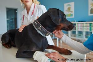 Centro de Rehabilitación Para Mascotas