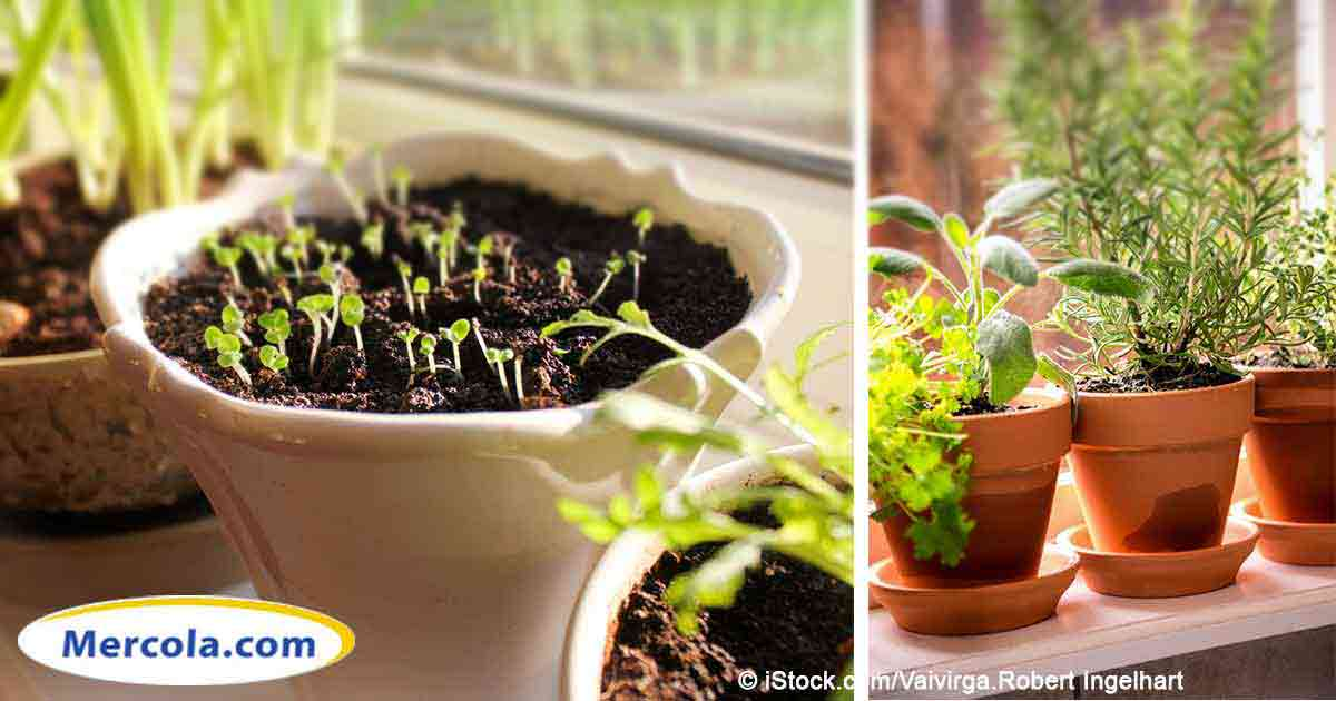 11 Vegetables Anyone Can Grow on Their Own