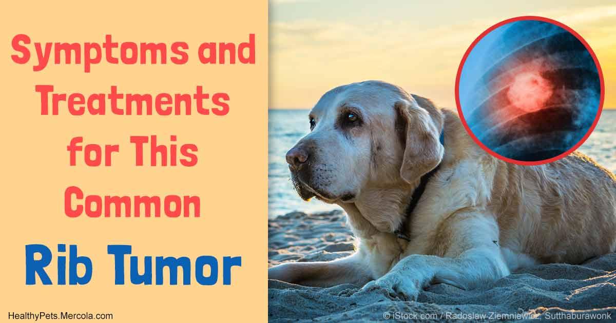 Mercola Canine Hormone Support ( oz.