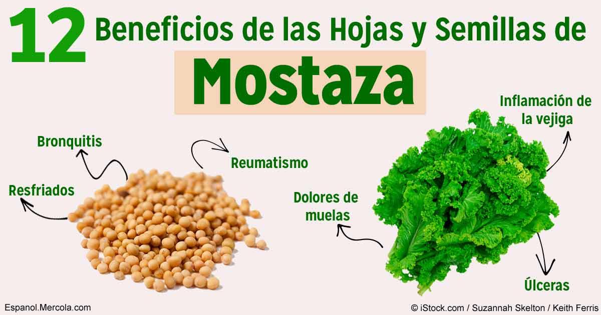 Las hojas y semillas de mostaza ofrecen poderosos beneficios for Informacion sobre el granito