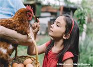 6 Datos Fascinantes Sobre los Pollos