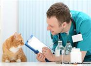Simple Stress Busters that Make Vet Visits Far Easier Than You Ever Dreamed