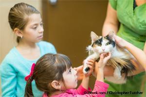 Adopción de Gatos