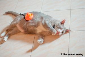 Diabetes en Mascotas