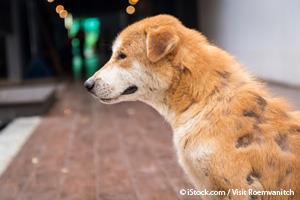 Lick Granuloma Dog Skin Injury Caused By Chronic Licking