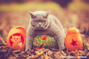 Halloween con Mascotas