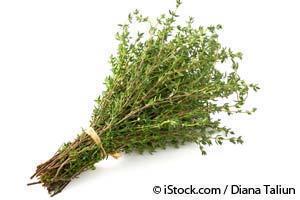 Tomillo Planta Medicinal