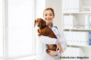 Visitas al Veterinario