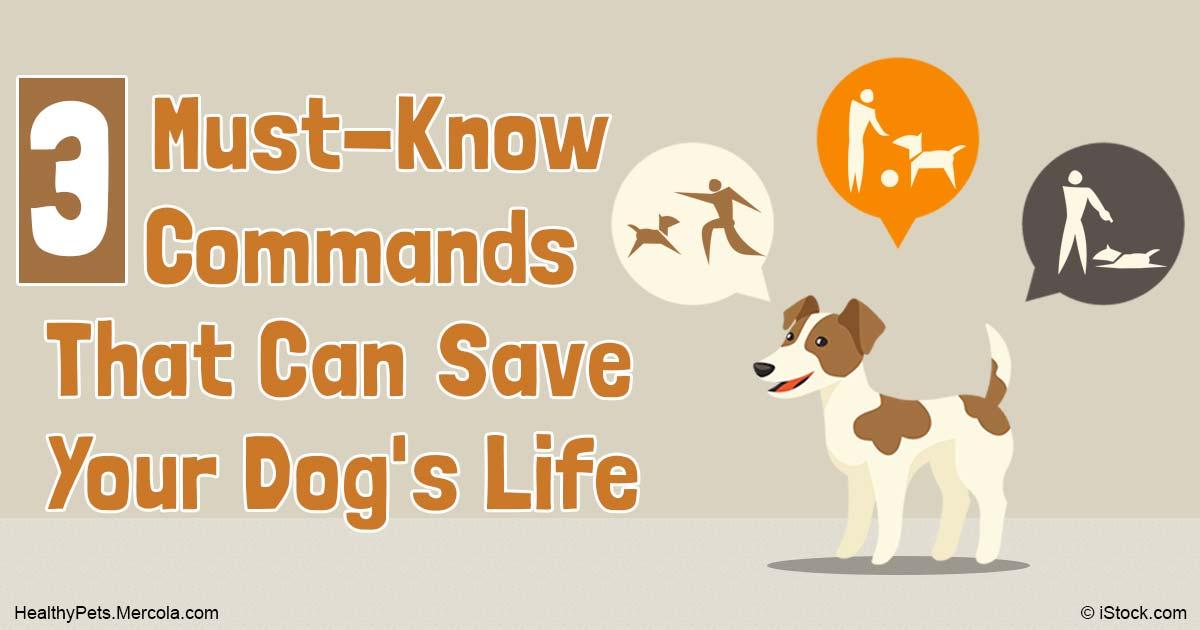Every Dog Should Receive Basic Behavior Training