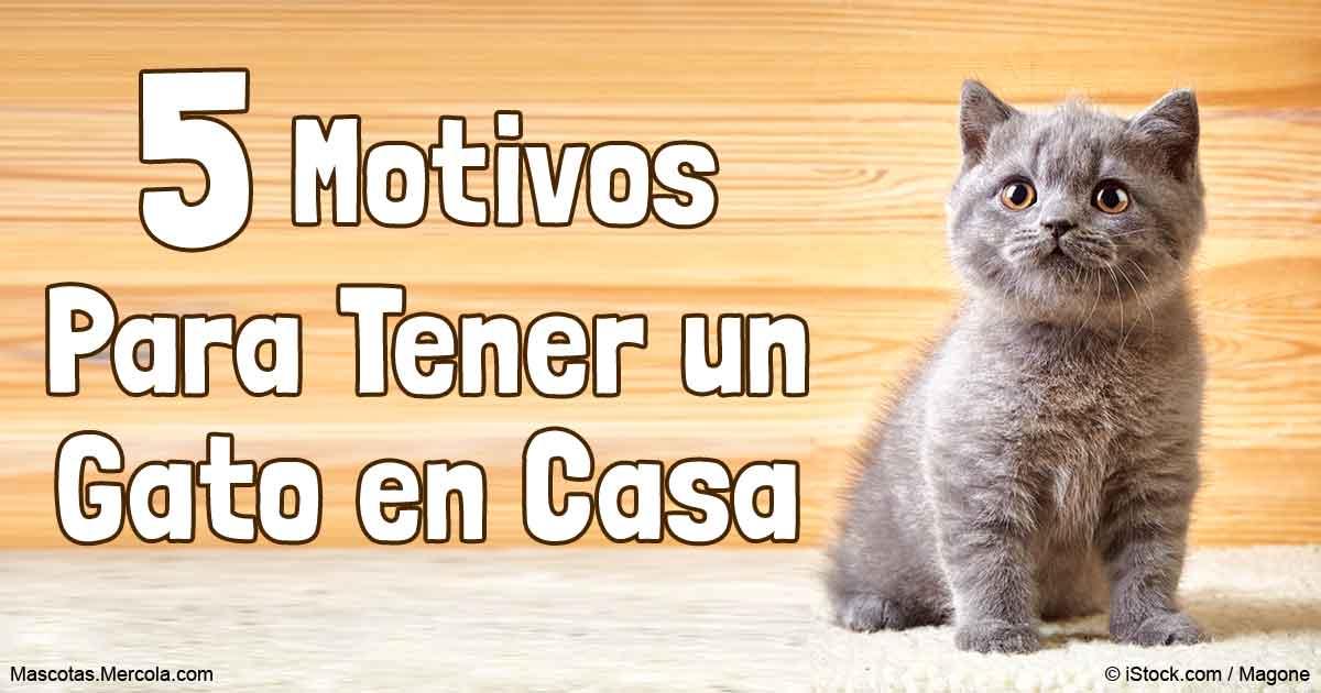 No adoptes a esta mascota sin antes leer estos 5 puntos - Mascotas originales para tener en casa ...