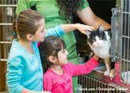 Adoptar Gato