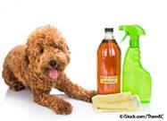 Fleas Hate the Smell and Taste of This Kitchen Staple - Spritz Your Pet With It Today