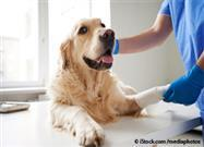 If Your Pet Finds Her Way Into This Trouble, Here Are 10 Ways to 'Doctor' Her