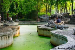 Algas Verde Azuladas