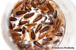 Leche de Cucaracha