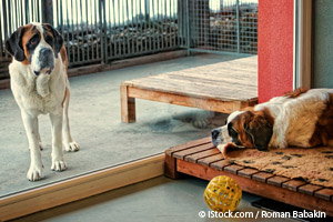 Dilatación Gástrica Vólvulo en Mascotas